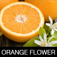 цветы апельсина